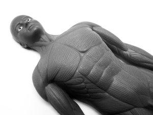 Hasnyálmirigy anatómiai elhelyezkedése